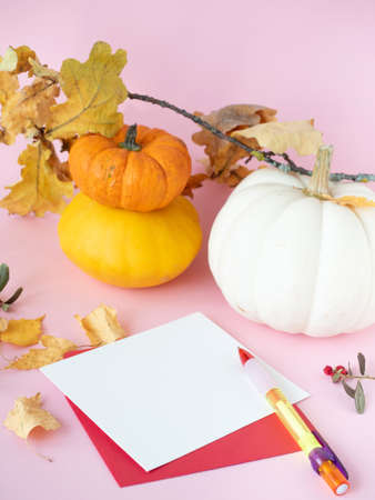 Empty white paper on red envelope with colorful pen, autumn leaves, dry berries and decorative pumpkins on pink background Zdjęcie Seryjne