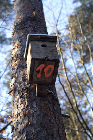 affixed: Wooden birdhouse affixed to a tree in the woods.