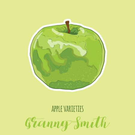 Hand Drawn Full Colors Colorful Apple Varietes Granny Smith Fruit Illustration