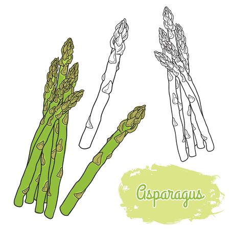 hand drawn colorful asparagus