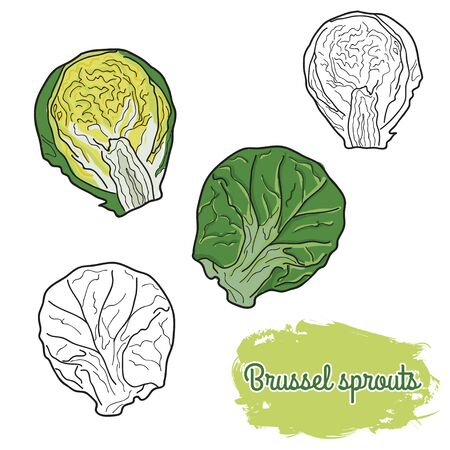 hand drawn colorful brussels sprouts