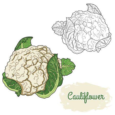 hand drawn colorful cauliflower Vecteurs