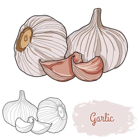 hand drawn colorful garlic