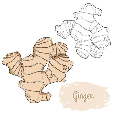 hand drawn colorful ginger