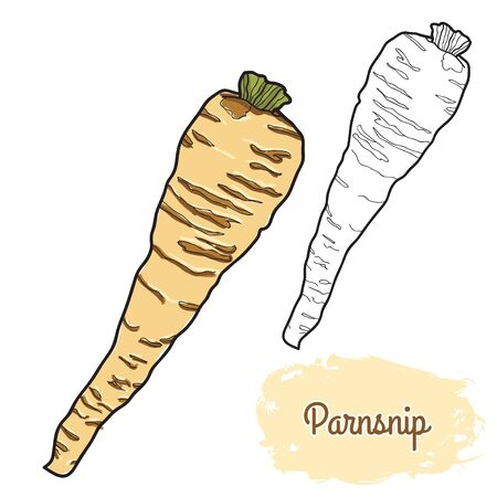 hand drawn colorful parsnip Ilustracja