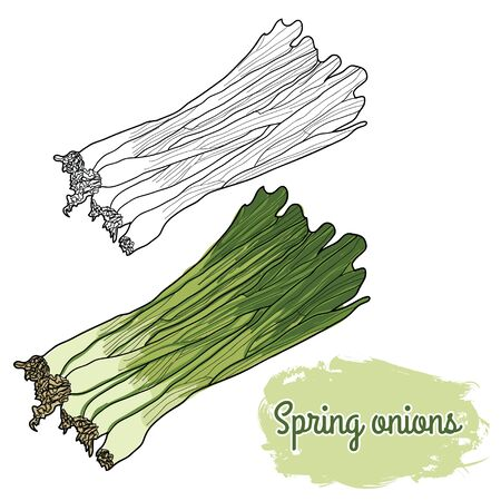Hand Drawn Colorful Spring Onions