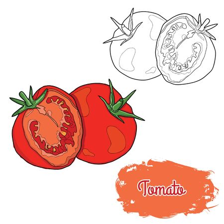 Hand Drawn Colorful Tomato Illustration
