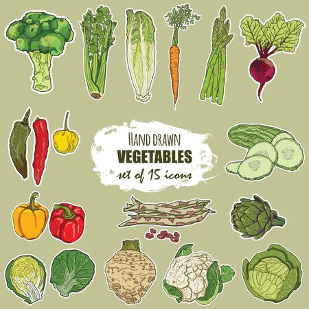 Hand drawn colorful vegetables set of 15 icons