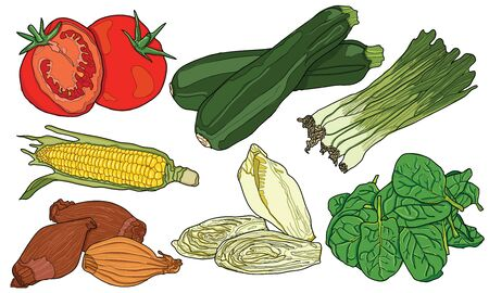Sketchy hand drawn colorful vegetables Illustration