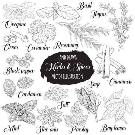 Vector Hand Drawn Vintage Style Culinary Herbs and Spices Set