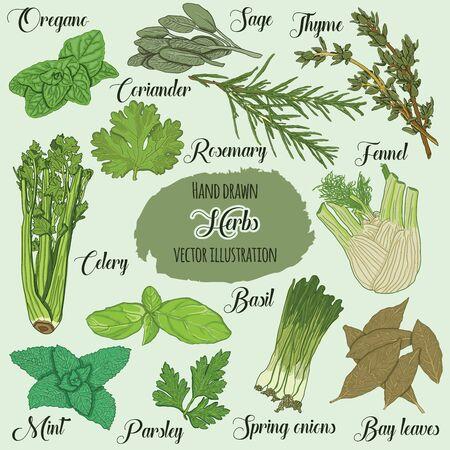 Hand Drawn Colorful Culinary Herbs Illusztráció