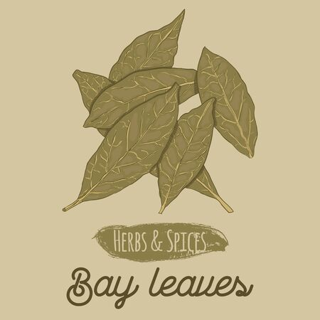 Hand Drawn Colorful Herbs and Spices Bay Leaves Illusztráció