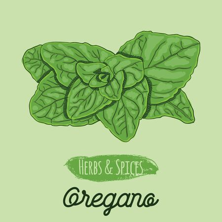 Hand Drawn Colorful Herbs and Spices Oregano