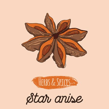 Hand Drawn Colorful Herbs and Spices Star Anise
