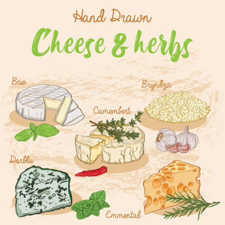 Hand Drawn Colorful Types of cheese and herbs set collection
