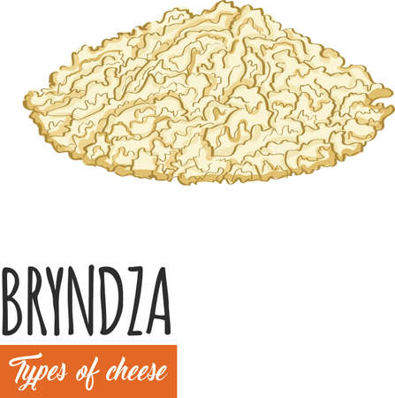 Hand drawn colorful Bryndza cheese. Slovak sheep cheese on white background Illustration