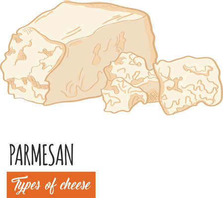 Hand drawn colorful Parmesan cheese
