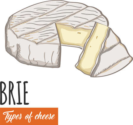 Hand drawn colorful Brie cheese Illustration