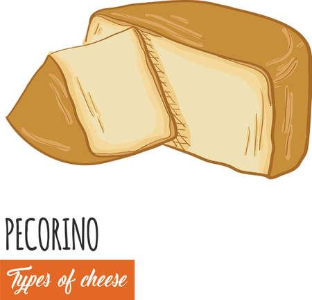 Hand drawn colorful Pecorino cheese