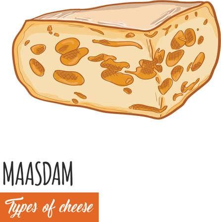 Hand drawn colorful Maasdam cheese Illustration