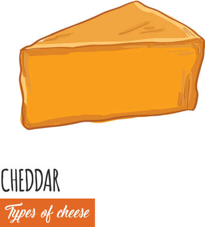 Hand drawn colorful Cheddar cheese