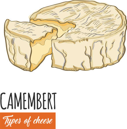 Hand drawn colorful Camembert cheese Illustration