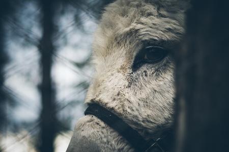 caged: Donkey caged