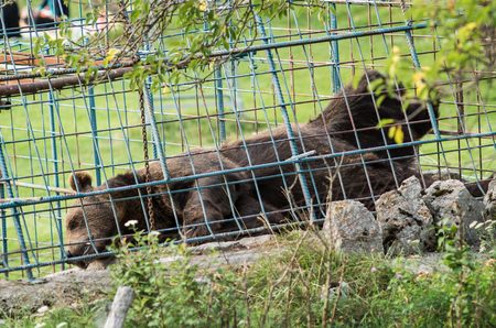 caged: Caged bear