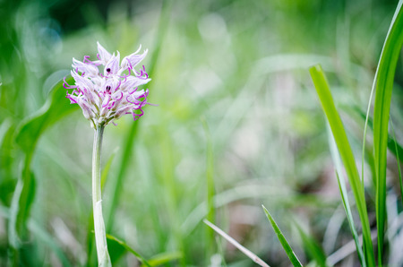 Wildflower: Wildflower
