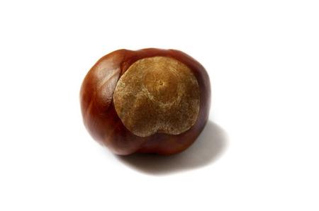 Horse Chestnut Isolated On White Background photo