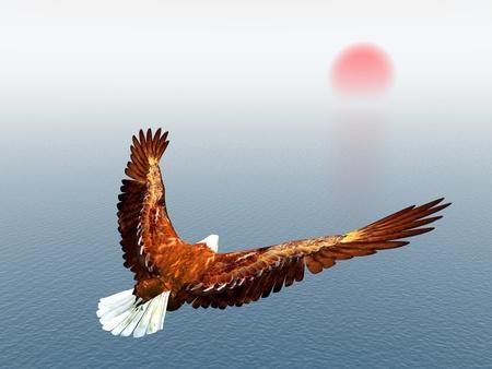 pajaros volando: �guila marina