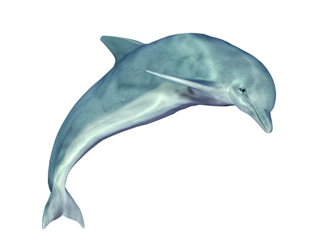Springen Dolfijn Stockfoto