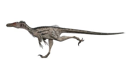 dangerously: Dinosaur Velociraptor