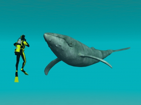 swimming in the sea: Whale with Diver