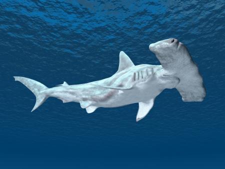 Çekiç balığı Stock Photo