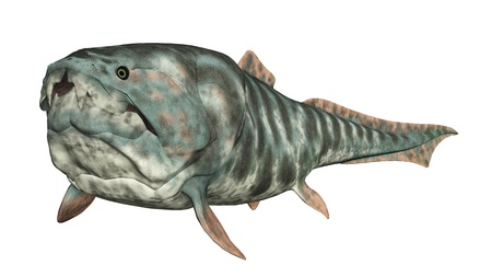 Dunkleosteus Stock Photo - 16648670