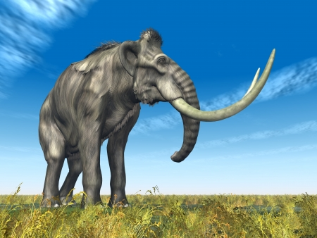 Mammoth Stock Photo - 16696814