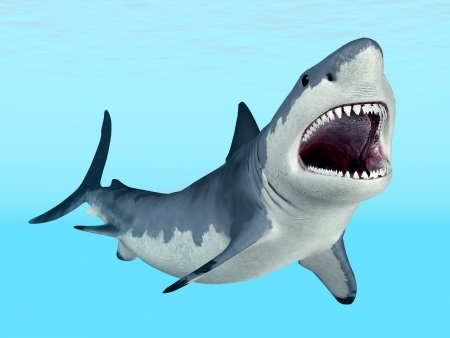 White Shark  Stock Photo
