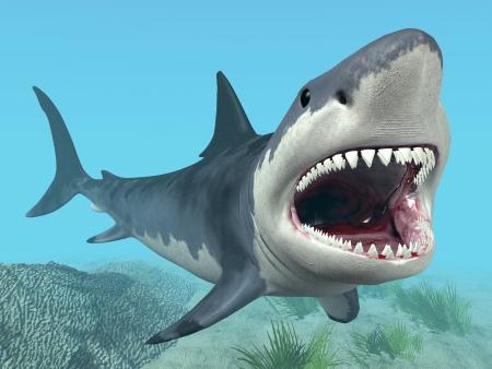 sharks: White Shark