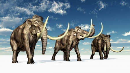 Mammoths Stock Photo - 16898532