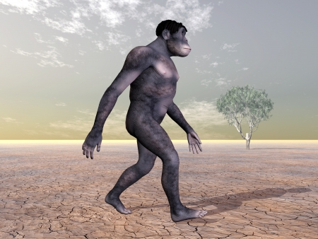 human evolution: Homo Habilis - Human Evolution