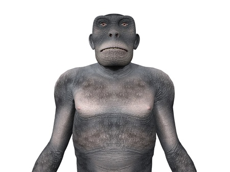 Homo Habilis - Human Evolution Stock Photo - 17041486