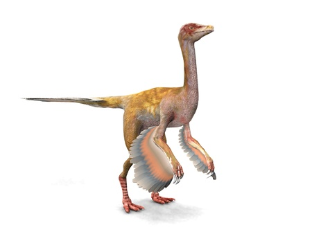 Caudipteryx photo