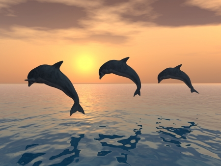 Jumping Dolphins photo