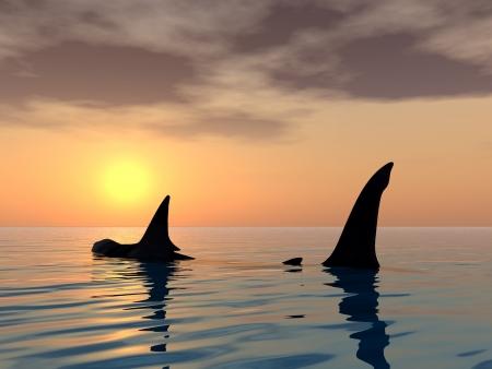 fin: Great White Shark Fin