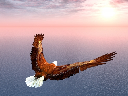 flying eagle: Sea Eagle