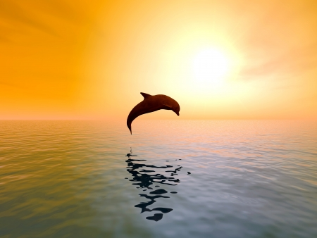 dolphin jumping: Jumping Dolphin