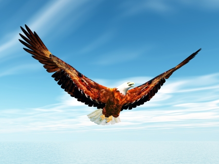 the bird of prey: Sea Eagle