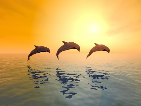 delfin: Delfiny skoków
