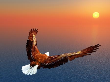 eagle flying: Sea Eagle